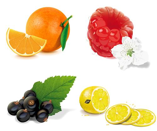 Vector fruits