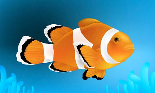 clown fish illustration
