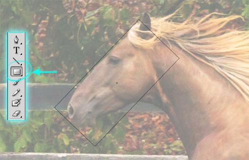 gradient mesh horse