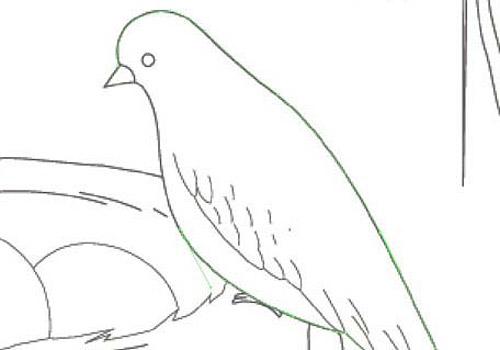 vector bird nest