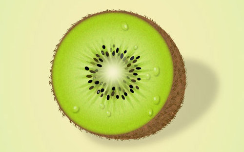 Kiwi Slice Drawing Kiwi in Adobe Illustrator
