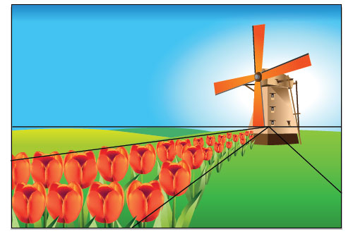 holland tulip field
