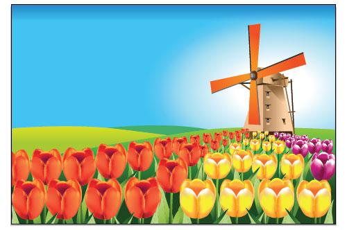holland tulip field