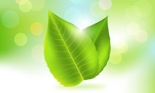 organic green boken background