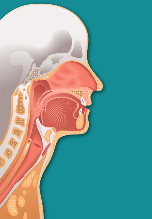 medical illustration 2712125