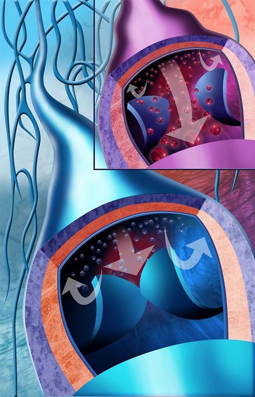 medical illustrations 2