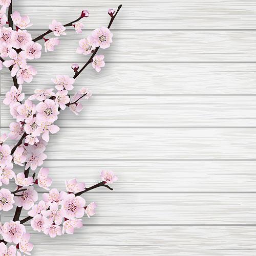 blooming-cherry
